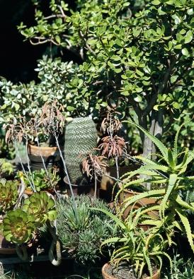 Bohatá skupina kaktusů a sukulentů