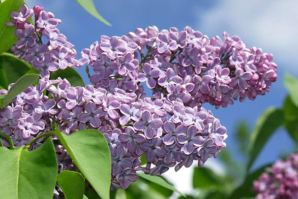zahrada-kere-serik-01 8341