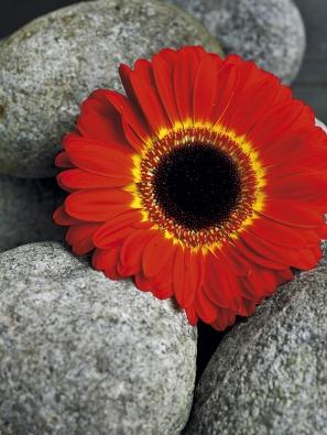 Červené květy zlepší náladu.