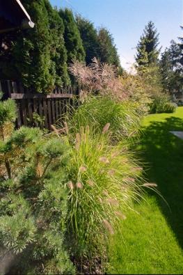 Značný prostor je věnován travinám, které jsou ozdobou zahrady po celý rok.