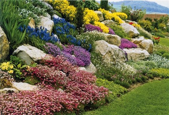 Jen kameny zabraňují půdopokryvným rostlinám zarůst celou skalku.