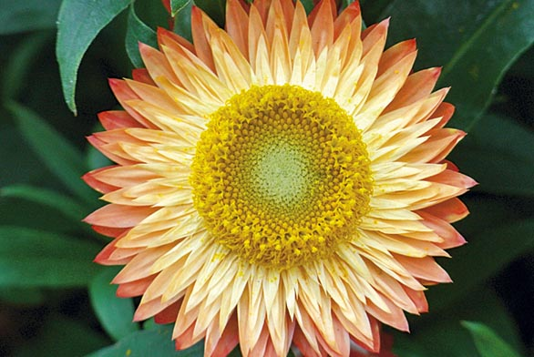 Tipy na pestré květinové záhony (ilustrační fotografie).