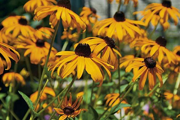Dbejte na ochranu před zahradními škůdci (ilustrační fotografie).