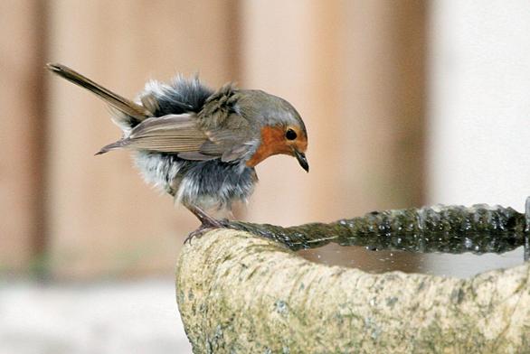 Ptáci zejména při krmení mláďat posbírají spoustu housenek.