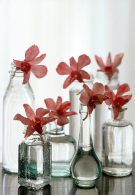 Ušlechtilé květy orchidejí se  dobře vyjímají ve skleněných vázách jemných linií.