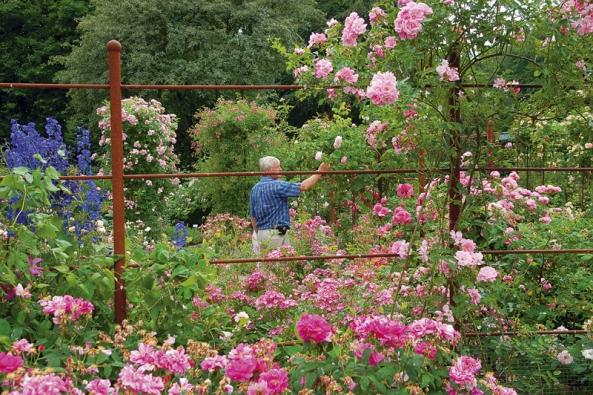 Rozárium si můžete založit i ve své zahradě. Doplníte-li je jarními cibulovinami, které do léta zatáhnou, bude krásné od jara do podzimu. Barevný efekt v zimě mohou zajistit šípky botanických druhů na plotech.
