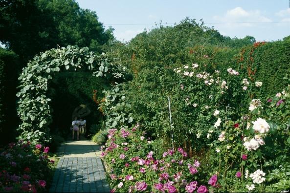 Vysázejte podél cesty řady stolístek (Rosa centifolia) či nízkých anglických růží (3 ks/m). Do záhonu pak keřové a stromkové růže, trvalky, ke zdem  a plotu pnoucí růže, plaménky (Clematis) a zimolezy (Lonicera), na loubí podražec (Aristolochia).