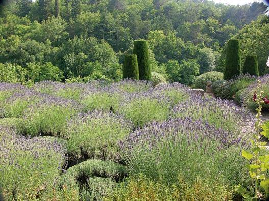 Pečlivě stříhané levandule v políčkách v červnu krásně kvetou. Po zbytek roku zdobí svým tvarem podobným balvanům.