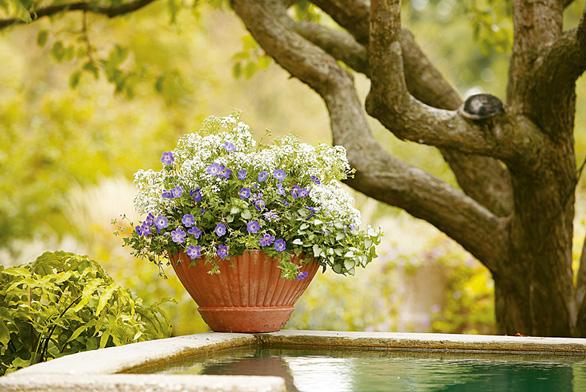 """Sněžná řeka"": kakost Geranium 'Jolly Bee', šater Gypsophilla 'Festival Star', hluchavka Lamium 'White Nancy'."