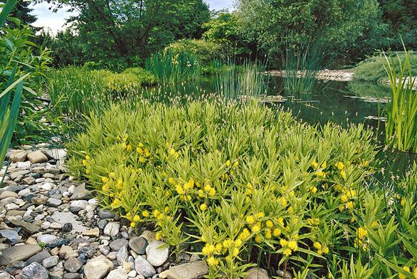 Zahradní variace na téma voda (ilustrační fotografie)