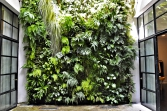 VIDEO: Zelené zahradní stěny, zdi a ploty
