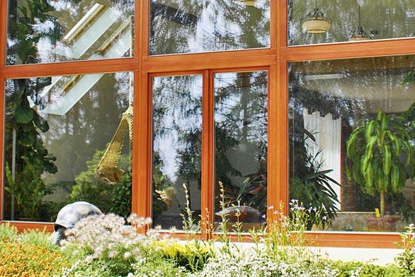 Okno do sousedovy zahrady