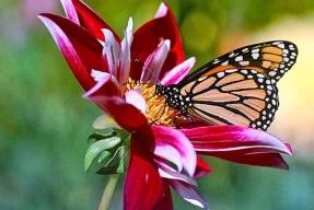Jak do zahrady přilákat motýly