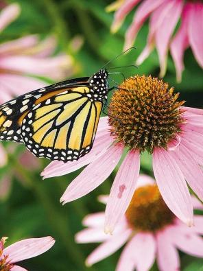 Pestré barvy motýlích křídel a květů mají pozitivní účinek na naše zdraví.