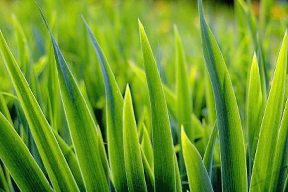 Vřetenová sekačka pro luxusní trávník (ilustrační fotografie)