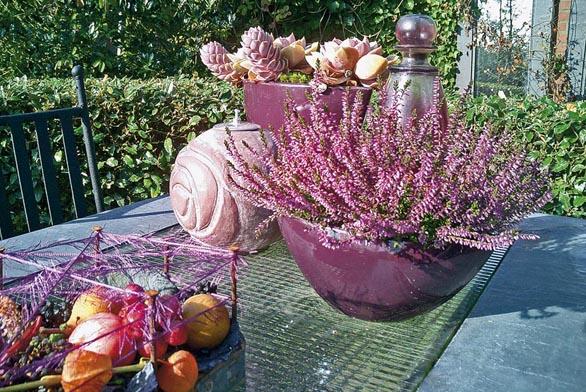 Vpodzimních měsících kvetoucí vřesy jistě naleznou své místo vnašich podzimních dekoracích.
