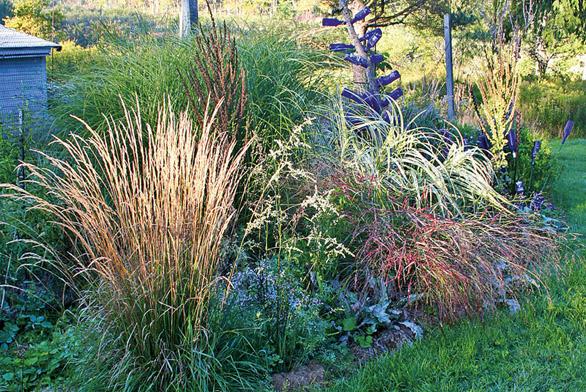 Ozdobné trávy jsou dekorativní po celý rok