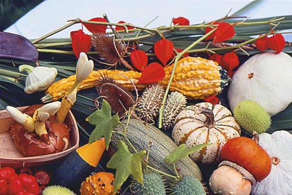 """Aranžmá kořenů můžete podle fantazie amožností doplnit plody tykví, plodenstvími slunečnice, květy slaměnek, červenými lampionky mochyně, zaschlými plodenstvími pupavy, štětky lesní nebo máčky. Tyto """"suché"""" doplňky zaručí, že vám výzdoba déle vydrží. Pokud už máte odrostlé děti, doplňte aranžmá rozkvétající hlízou ocúnu."""