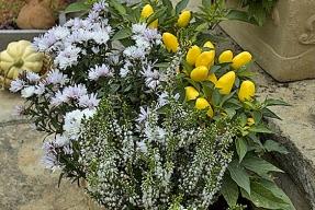 Sázejte podzimní druhy květin