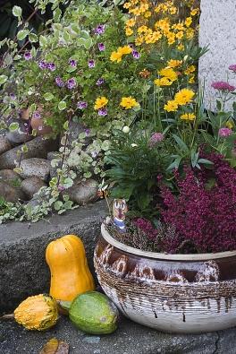 Vchod do domu lemuje řada podzimních dekorací včetně vřesů výrazných tónů.