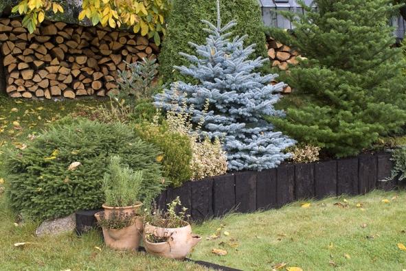 Vcentru zahrady vyniká smrk stříbrný (Picea pungens)  ajedle korejská (Abies koreana).