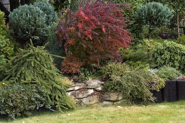 Střed zahrady je lemovaný pražci ikameny. Vpopředí vyniká smrk ztepilý (Picea abies), vzadu na podzim krásně červeně vybarvený dřišťál (Berberis).
