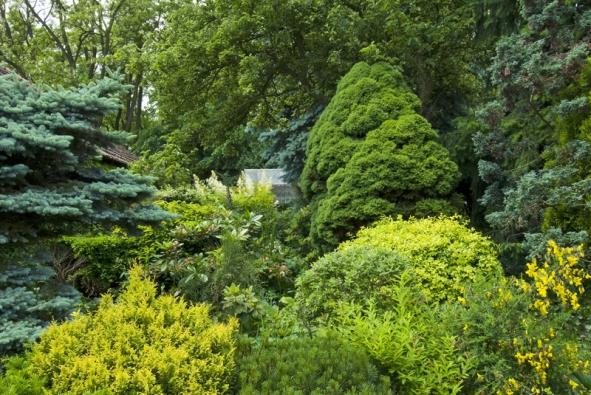 Bujná vegetace se vzrostlou dominantní Picea glauca 'Albertiana' (forma zakrslého smrku) avzrostlou Picea Pungens Globosa (forma stříbrného smrku). Najdeme tady také dřišťál (Berberis thunbergii 'Aurea'), Pinus mugo Pumilio (borovice kleč) ažlutě kvetoucí čilimník (Cytisus hirsutus).
