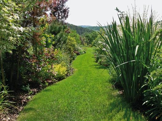 Trávníková cesta klikatící se mezi vyšší zelení je efektním prvkem zahrady.