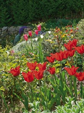 Zásadní pro celkové řešení zahrady jsou očekávání, která sní spojujete.