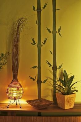 Bambus, typický symbol rychlého růstu aexpanze se nejčastěji používá pro posílení sektoru prosperity.
