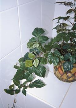 Do našich očistných místností si pořizujme raději malolisté druhy a kultivary.