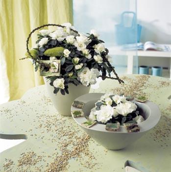 Když se choulostivé krasavici něco nelíbí, reaguje shazováním nerozvitých květů.