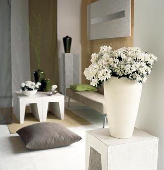 Na léto zapusťte květináč do země na polostinné místo v zahradě.