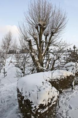 Živé ploty vytvářejí čistě bílé famózní křivky.