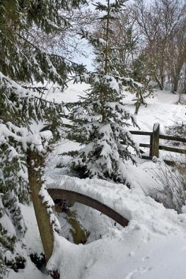 Zima neznamená jen odhrnování sněhu, ale i shazování měkoučkých peřin ze stromů, když se větve začnou ohýbat.