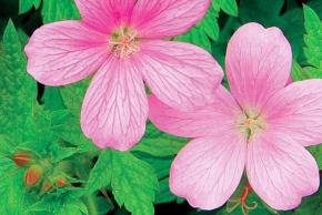 Čím osázet zahradní zákoutí?