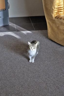 Svým kočičím zrakem dohlížela na celou proměnu i druhá obyvatelka bytu.