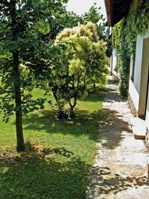 Všechny zahradní komunikace jsou dlážděny kamenem, ruj vlasatá dělá společnost štíhlému ginkgu - jinanu.