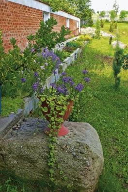 Původní kravský žlab slouží jako záhon, zeď odděluje ovocný sad od nového pozemku.