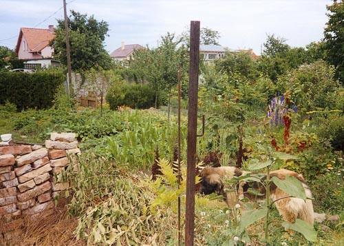Současný stav zahrady