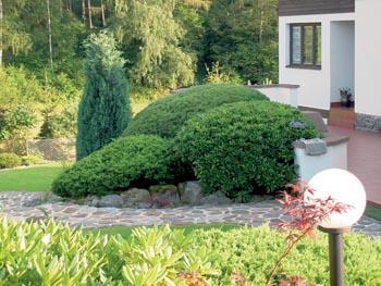 Rododendrony a borovice jsou řezány každý rok, jinak by už dávno zarostly chodník a obytnou terasu.