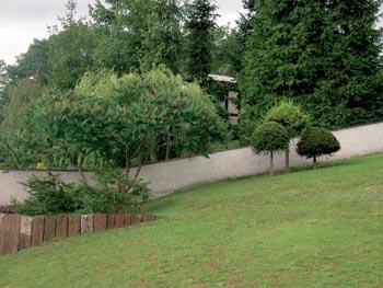 Před patnácti lety rostly tyto modříny ještě v lese.