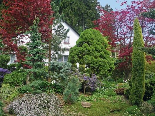 Zeleň jehličnanů - je zde jedlovec (Tsuga), borovice, jedle a smrk - doplňuje tmavě fialový Rhododendron russatum a bíle kvetoucí vřesovec pleťový (Erica carnea).
