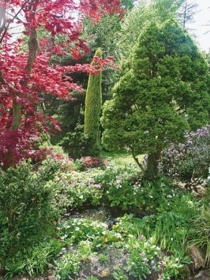 U břehu jezírka vyniká javor dlanitolistý ´Atropurpureum´ (Acer palmatum) nebo jalovec obecný (Juniperus communis).