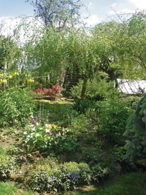 Bříza bělokorá ´Youngii´(Betula verrucosa) s výsadbou trvalek a cibulovin.