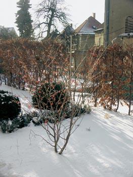 Na západě je zahrada od sousedů oddělena habrovým živým plotem.