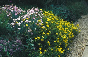 Okraj záhonu nebo cesty ozdobí polštáře plazivých skalniček: růžový hvozdík (Dianthus sp.), mateřídouška (Thymus) a žlutý devaterník (Helianthemum).