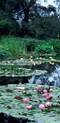 zahrada-kosatec-rybnik-06 16342
