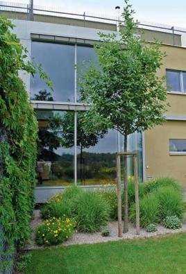 Blízké okolí moderního domu zdobí jeřáb (Sorbus latifolia 'Atrivorens') s nejrůznějšími trvalkami: Panicum 'Rehbraun' – proso, Papaver orientale 'Royal Wedding' – mák východní, Coreopsis verticilata 'Grandiflora' – krásnoočko, Hemerocallis 'Corky' – denivka a Salvia officinalis 'Berggarten' – šalvěj lékařská.