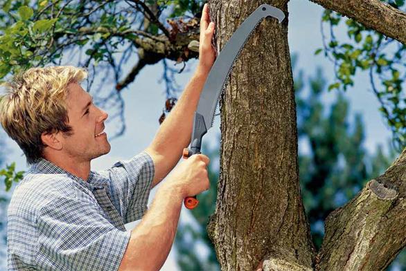 Jak na tvarování dřevin